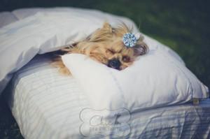 Novo site de compras para cães é lançado no mercado: Chic pra Cachorro