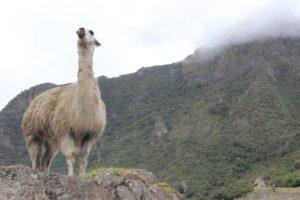 Peru: gastronomia e natureza